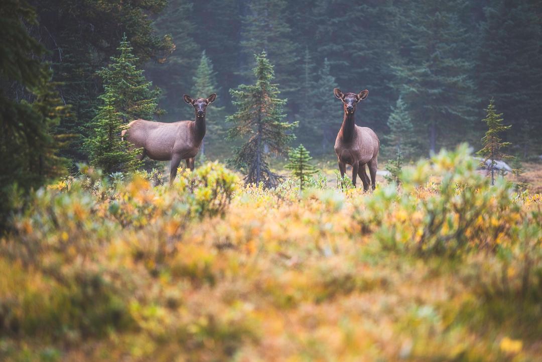 twin falls, iceline, yoho national park, canada, bc, parks canada