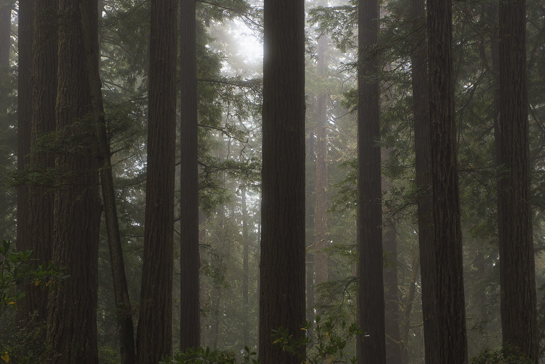 Redwood National Park, californie
