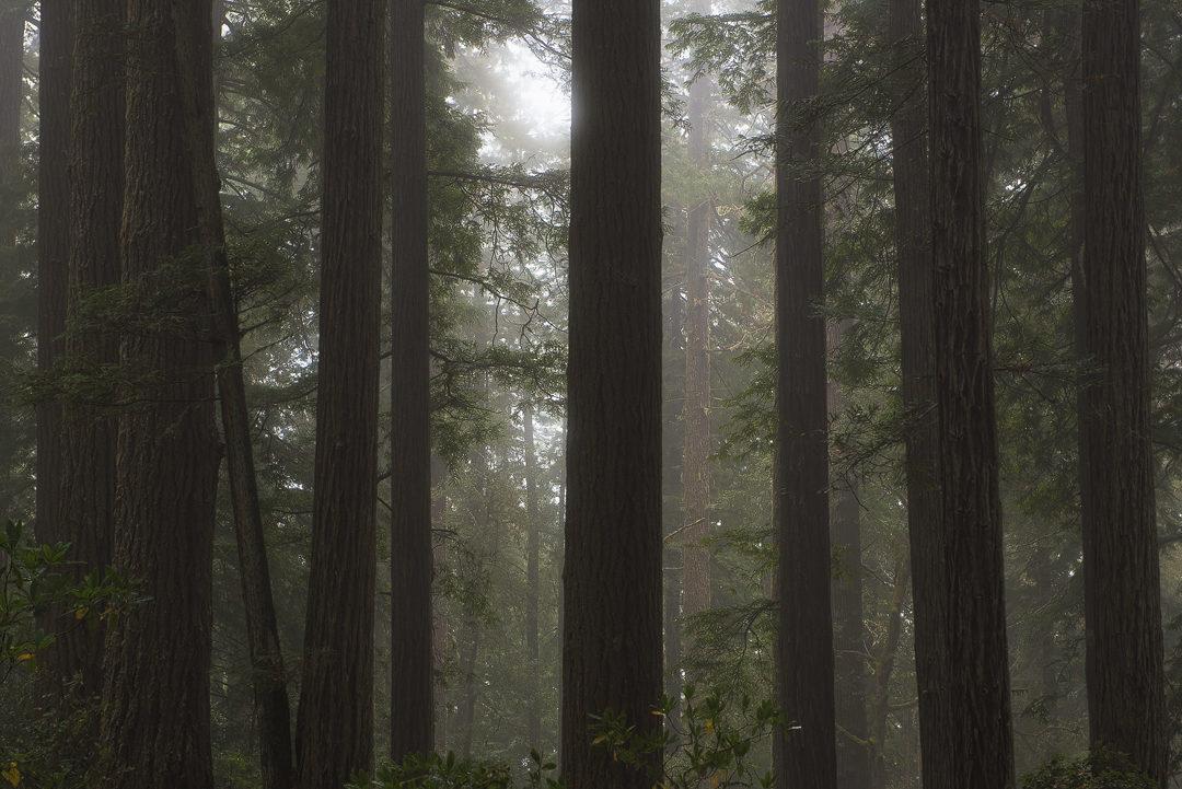 Redwood National Park, californie