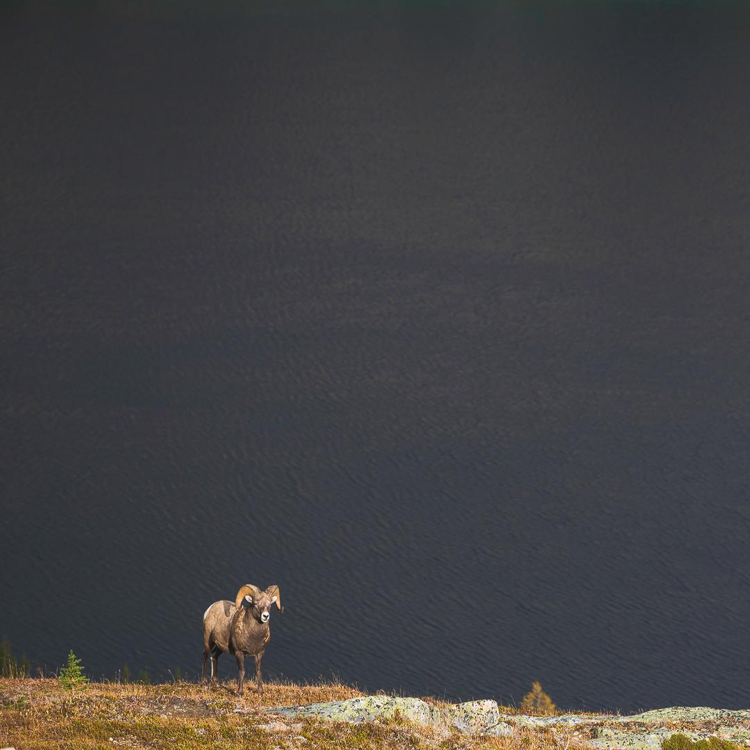 Lac Baker, Skoki, Banff National Park